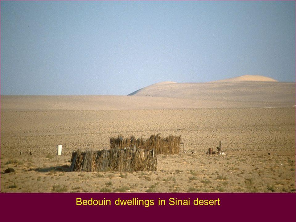 Bedouin dwellings in Sinai desert