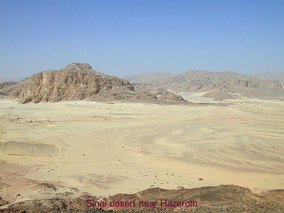 Sinai desert near Hazeroth