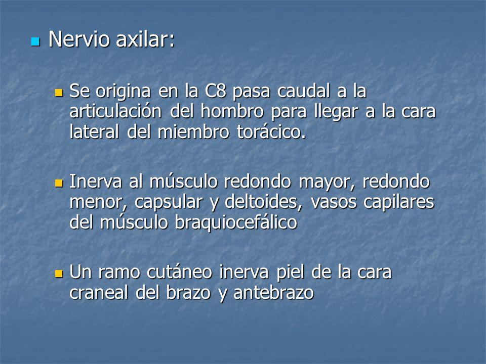 Nervio axilar: Nervio axilar: Se origina en la C8 pasa caudal a la articulación del hombro para llegar a la cara lateral del miembro torácico. Se orig
