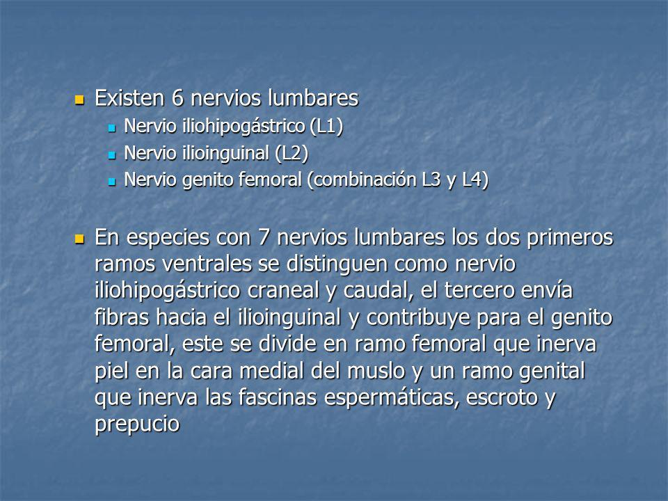 Existen 6 nervios lumbares Existen 6 nervios lumbares Nervio iliohipogástrico (L1) Nervio iliohipogástrico (L1) Nervio ilioinguinal (L2) Nervio ilioin