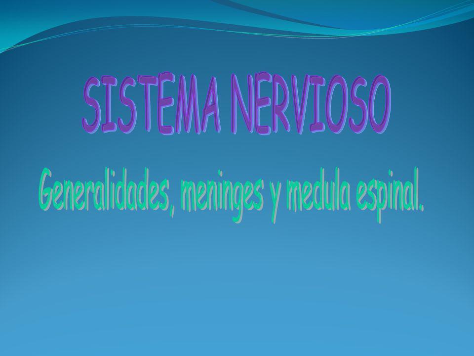 Sistemas aferentes: Conducen impulsos hacia la medula espinal y algunas partes encefálicas particulares.