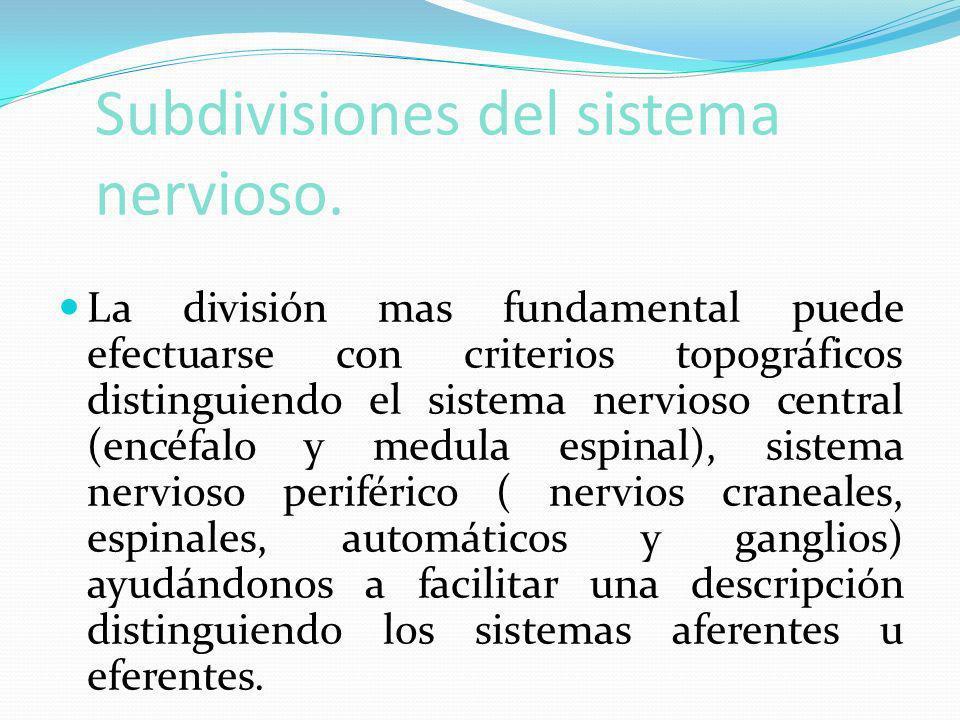 Subdivisiones del sistema nervioso. La división mas fundamental puede efectuarse con criterios topográficos distinguiendo el sistema nervioso central