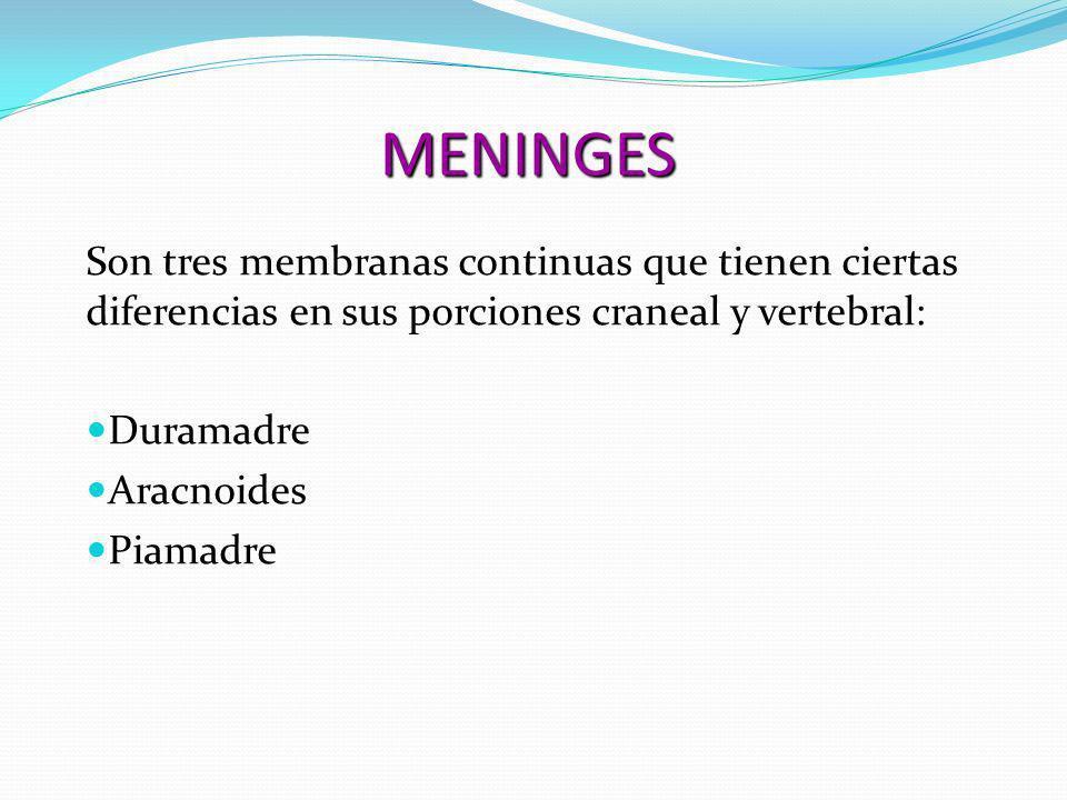 MENINGES Son tres membranas continuas que tienen ciertas diferencias en sus porciones craneal y vertebral: Duramadre Duramadre Aracnoides Aracnoides P
