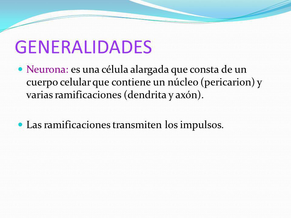 GENERALIDADES Neurona: es una célula alargada que consta de un cuerpo celular que contiene un núcleo (pericarion) y varias ramificaciones (dendrita y