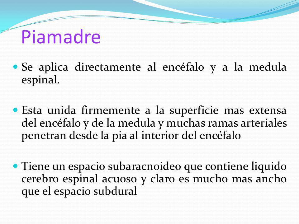 Piamadre Se aplica directamente al encéfalo y a la medula espinal. Esta unida firmemente a la superficie mas extensa del encéfalo y de la medula y muc