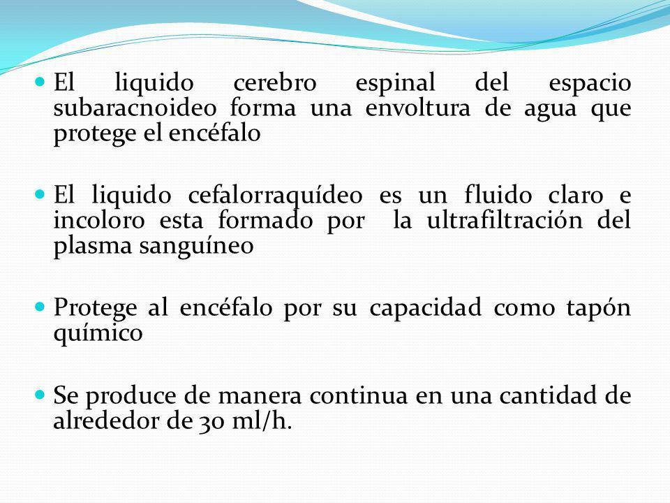 El liquido cerebro espinal del espacio subaracnoideo forma una envoltura de agua que protege el encéfalo El liquido cefalorraquídeo es un fluido claro