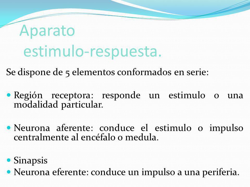 Aparato estimulo-respuesta. Se dispone de 5 elementos conformados en serie: Región receptora: responde un estimulo o una modalidad particular. Neurona