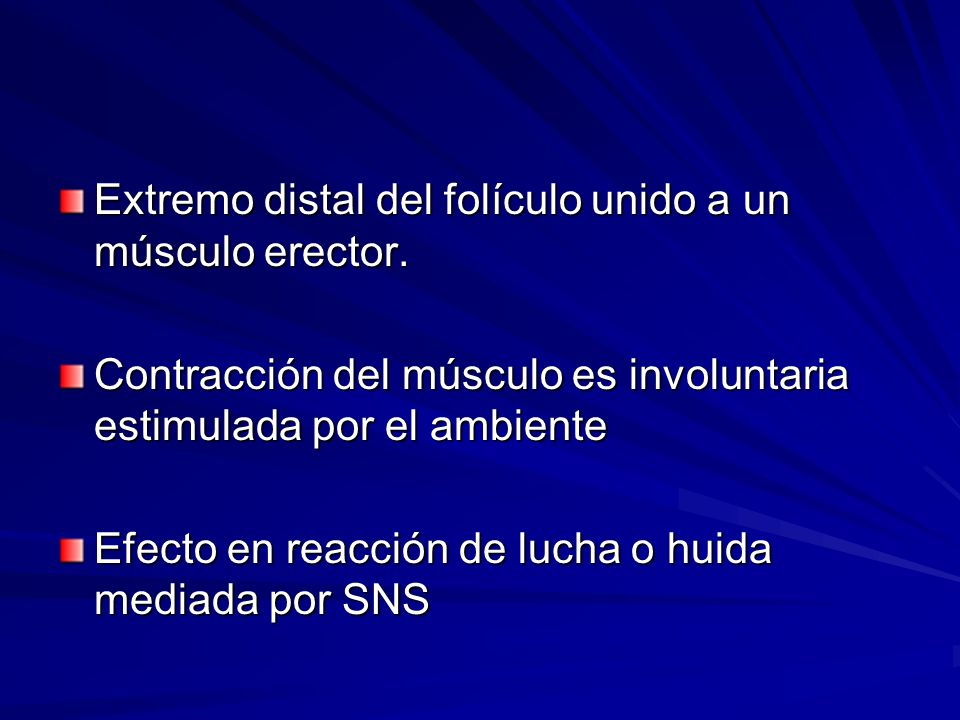 Extremo distal del folículo unido a un músculo erector. Contracción del músculo es involuntaria estimulada por el ambiente Efecto en reacción de lucha