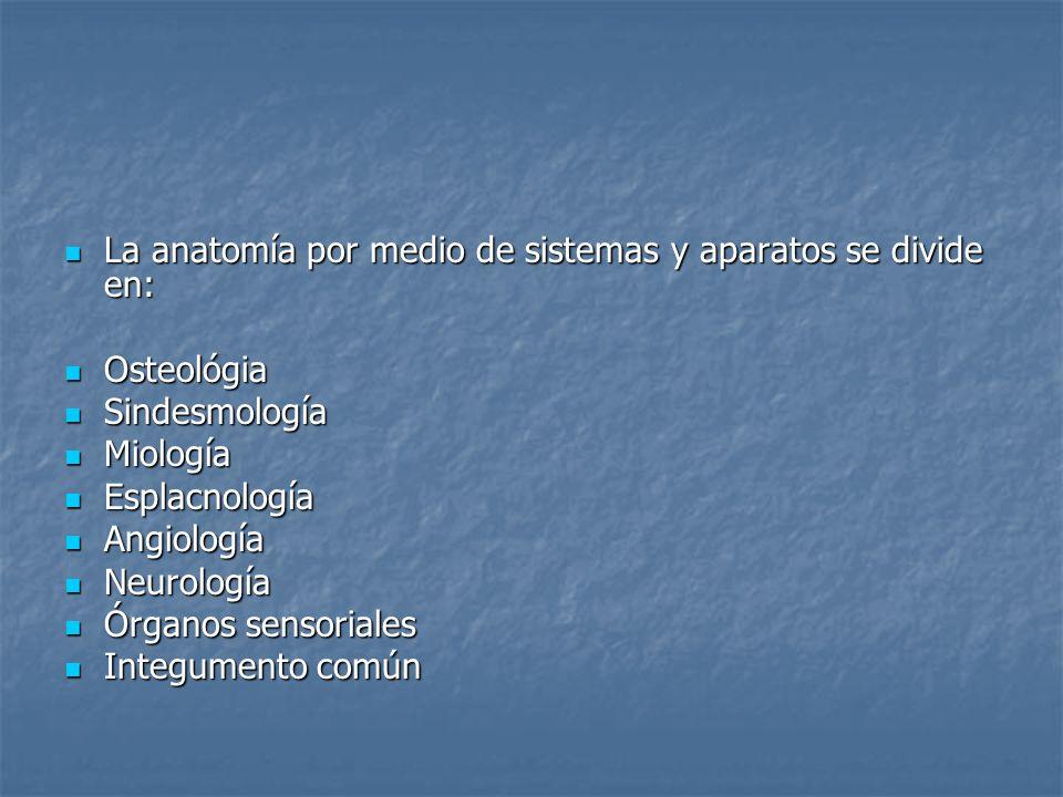 La anatomía por medio de sistemas y aparatos se divide en: La anatomía por medio de sistemas y aparatos se divide en: Osteológia Osteológia Sindesmolo