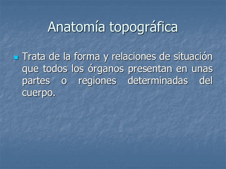 Anatomía topográfica Trata de la forma y relaciones de situación que todos los órganos presentan en unas partes o regiones determinadas del cuerpo. Tr