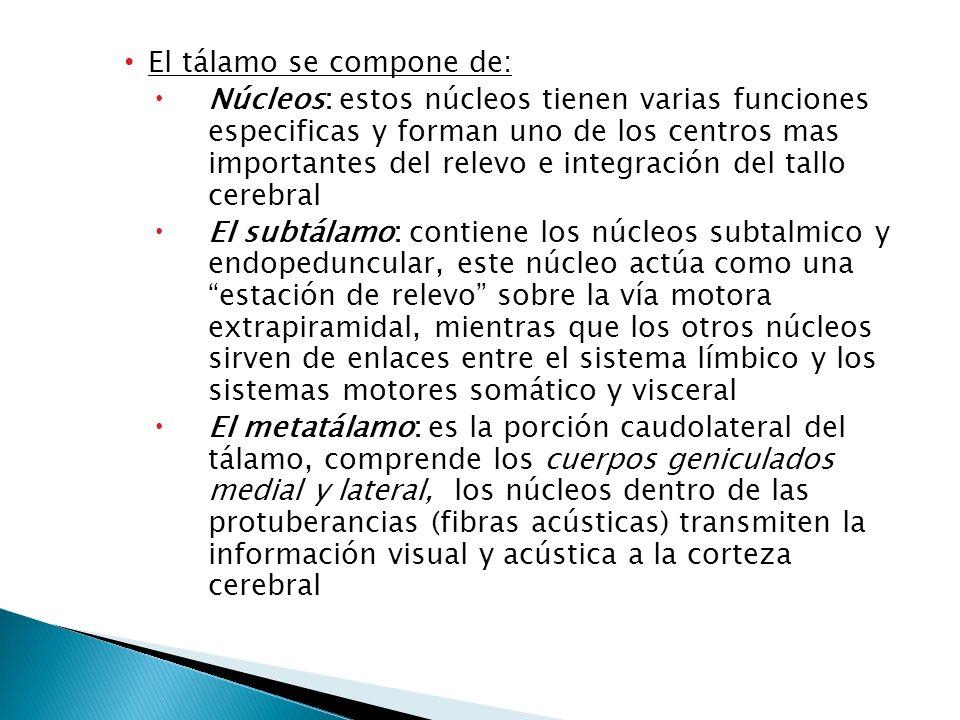 El tálamo se compone de: Núcleos: estos núcleos tienen varias funciones especificas y forman uno de los centros mas importantes del relevo e integraci