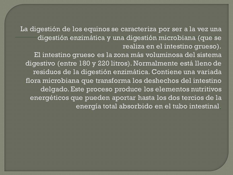 EL RECTO SE ASEMEJA EN SU ESTRUCTURA Y POSICION AL DE OTRAS ESPECIES.