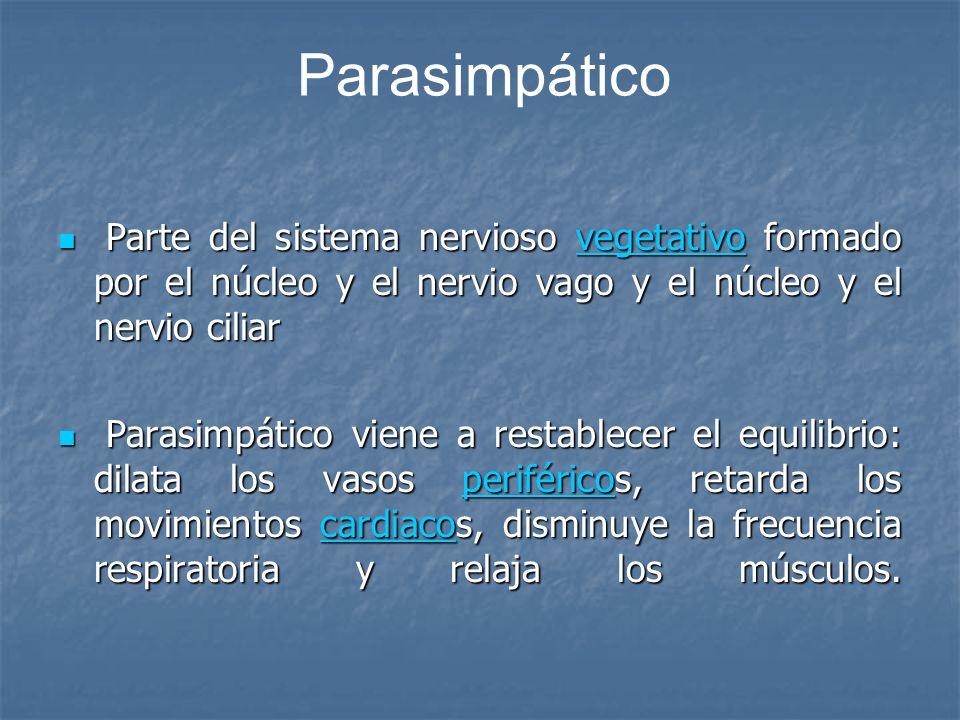 Parasimpático Parte del sistema nervioso vegetativo formado por el núcleo y el nervio vago y el núcleo y el nervio ciliar Parte del sistema nervioso v