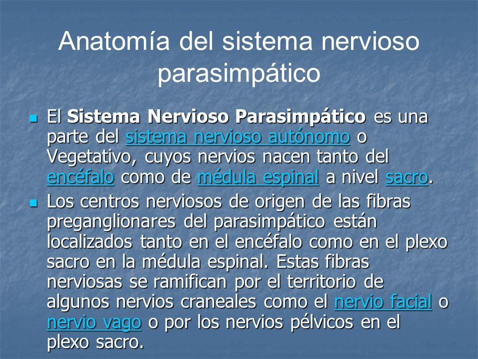 Anatomía del sistema nervioso parasimpático El Sistema Nervioso Parasimpático es una parte del sistema nervioso autónomo o Vegetativo, cuyos nervios n