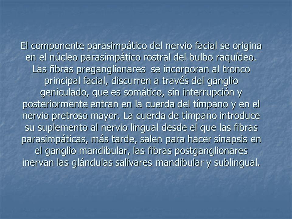 El componente parasimpático del nervio facial se origina en el núcleo parasimpático rostral del bulbo raquídeo. Las fibras preganglionares se incorpor