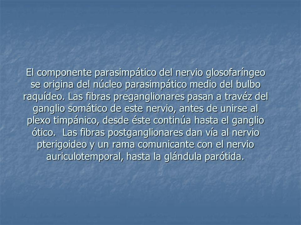 El componente parasimpático del nervio glosofaríngeo se origina del núcleo parasimpático medio del bulbo raquídeo. Las fibras preganglionares pasan a