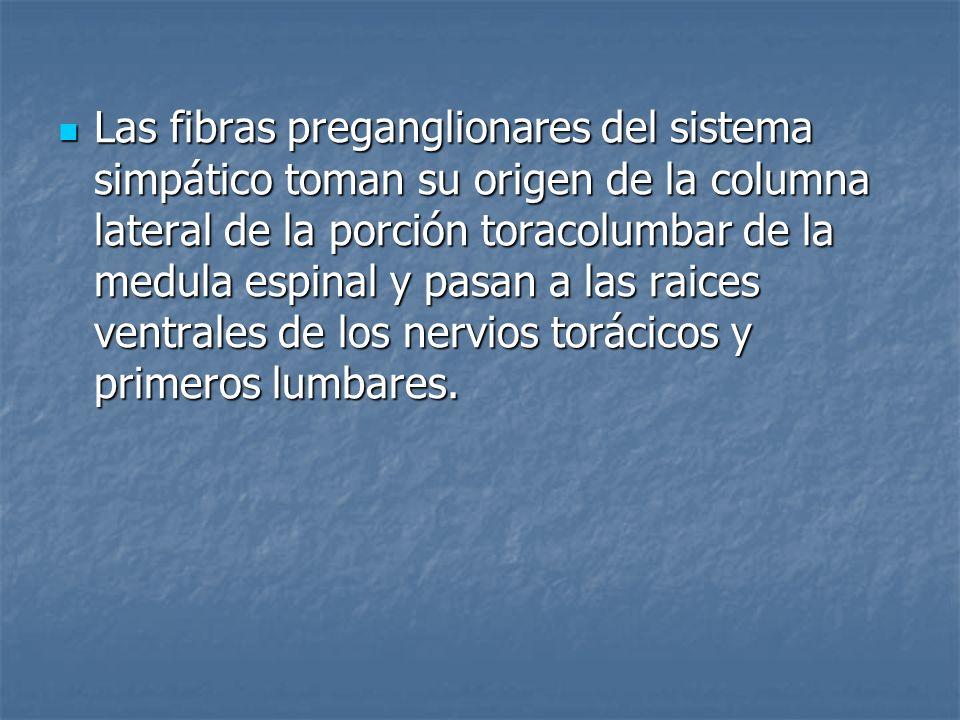 Las fibras preganglionares del sistema simpático toman su origen de la columna lateral de la porción toracolumbar de la medula espinal y pasan a las r