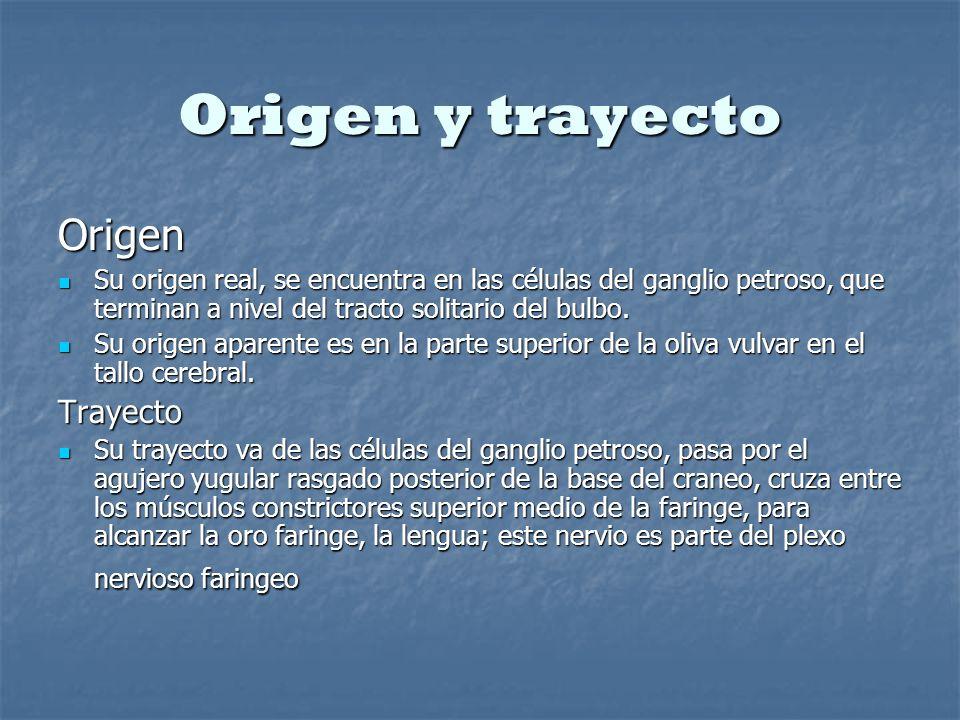 Origen y trayecto Origen Su origen real, se encuentra en las células del ganglio petroso, que terminan a nivel del tracto solitario del bulbo. Su orig