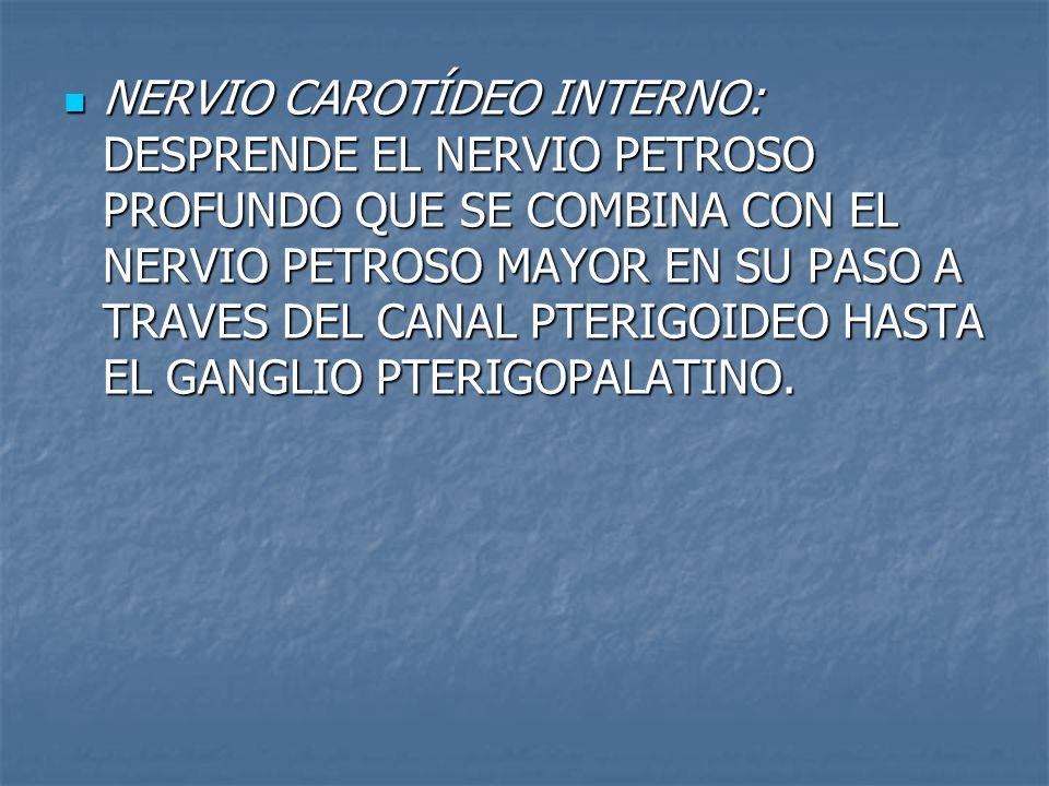NERVIO CAROTÍDEO INTERNO: DESPRENDE EL NERVIO PETROSO PROFUNDO QUE SE COMBINA CON EL NERVIO PETROSO MAYOR EN SU PASO A TRAVES DEL CANAL PTERIGOIDEO HA