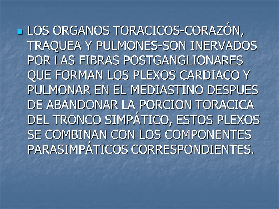 LOS ORGANOS TORACICOS-CORAZÓN, TRAQUEA Y PULMONES-SON INERVADOS POR LAS FIBRAS POSTGANGLIONARES QUE FORMAN LOS PLEXOS CARDIACO Y PULMONAR EN EL MEDIAS