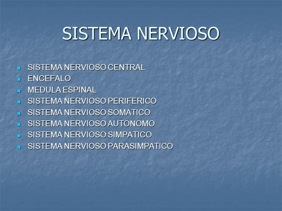 SISTEMA NERVIOSO SISTEMA NERVIOSO CENTRAL SISTEMA NERVIOSO CENTRAL ENCEFALO ENCEFALO MEDULA ESPINAL MEDULA ESPINAL SISTEMA NERVIOSO PERIFERICO SISTEMA