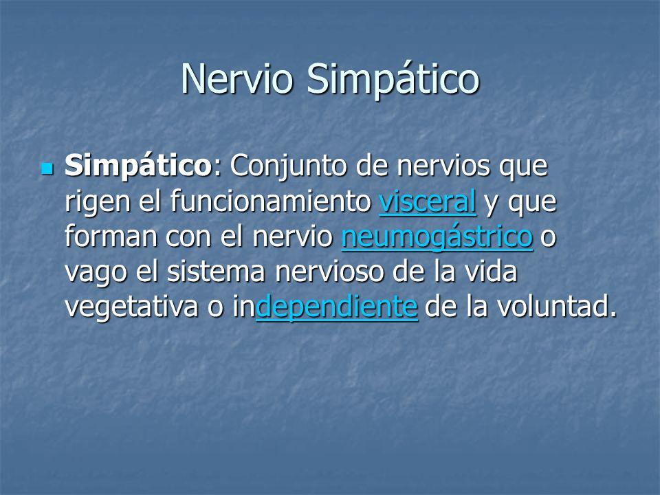 Nervio Simpático Simpático: Conjunto de nervios que rigen el funcionamiento visceral y que forman con el nervio neumogástrico o vago el sistema nervio