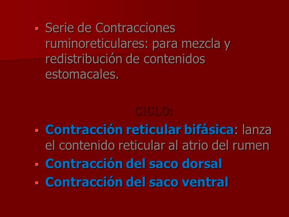 Serie de Contracciones ruminoreticulares: para mezcla y redistribución de contenidos estomacales. Serie de Contracciones ruminoreticulares: para mezcl