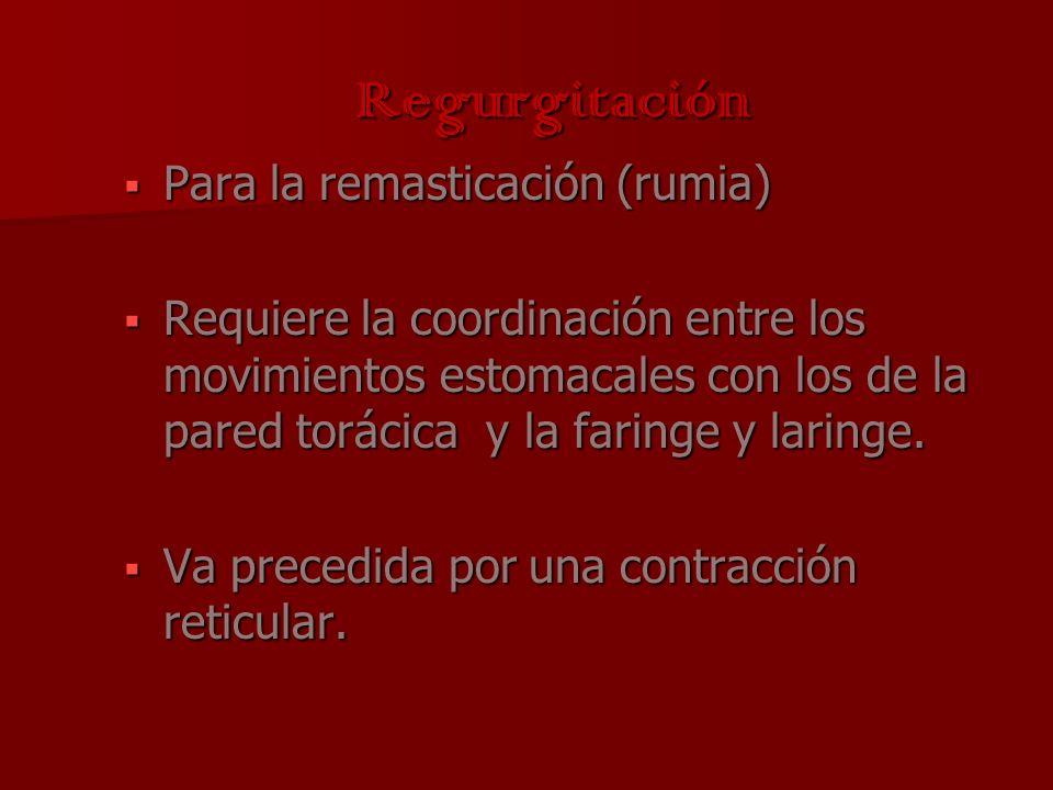 Regurgitación Para la remasticación (rumia) Para la remasticación (rumia) Requiere la coordinación entre los movimientos estomacales con los de la par