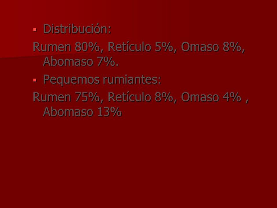 Distribución: Distribución: Rumen 80%, Retículo 5%, Omaso 8%, Abomaso 7%. Pequemos rumiantes: Pequemos rumiantes: Rumen 75%, Retículo 8%, Omaso 4%, Ab