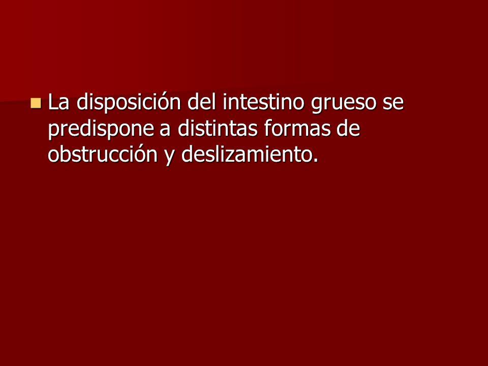 La disposición del intestino grueso se predispone a distintas formas de obstrucción y deslizamiento. La disposición del intestino grueso se predispone