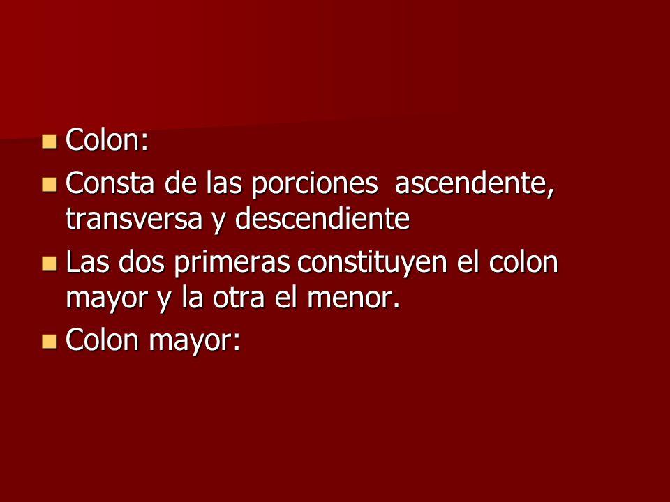 Colon: Colon: Consta de las porciones ascendente, transversa y descendiente Consta de las porciones ascendente, transversa y descendiente Las dos prim