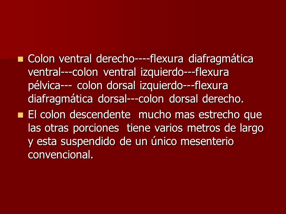 Colon ventral derecho----flexura diafragmática ventral---colon ventral izquierdo---flexura pélvica--- colon dorsal izquierdo---flexura diafragmática d