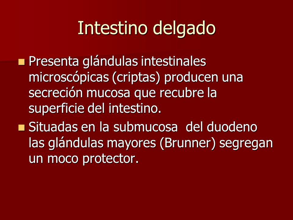 Intestino delgado Presenta glándulas intestinales microscópicas (criptas) producen una secreción mucosa que recubre la superficie del intestino. Prese