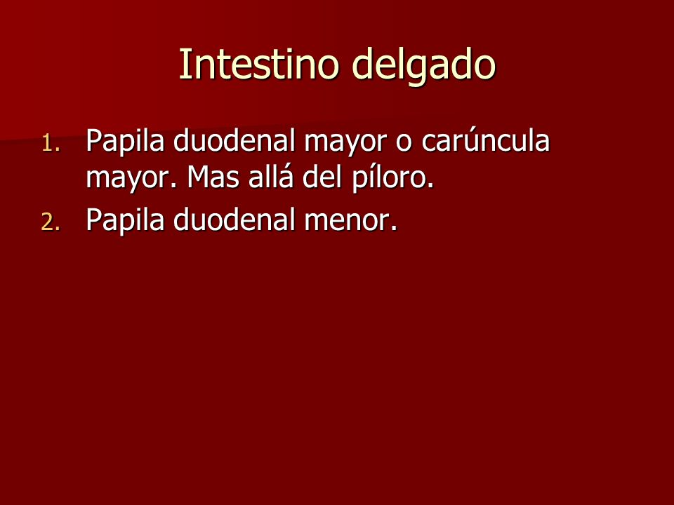 Intestino delgado 1. Papila duodenal mayor o carúncula mayor. Mas allá del píloro. 2. Papila duodenal menor.