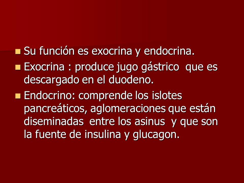 Su función es exocrina y endocrina. Su función es exocrina y endocrina. Exocrina : produce jugo gástrico que es descargado en el duodeno. Exocrina : p