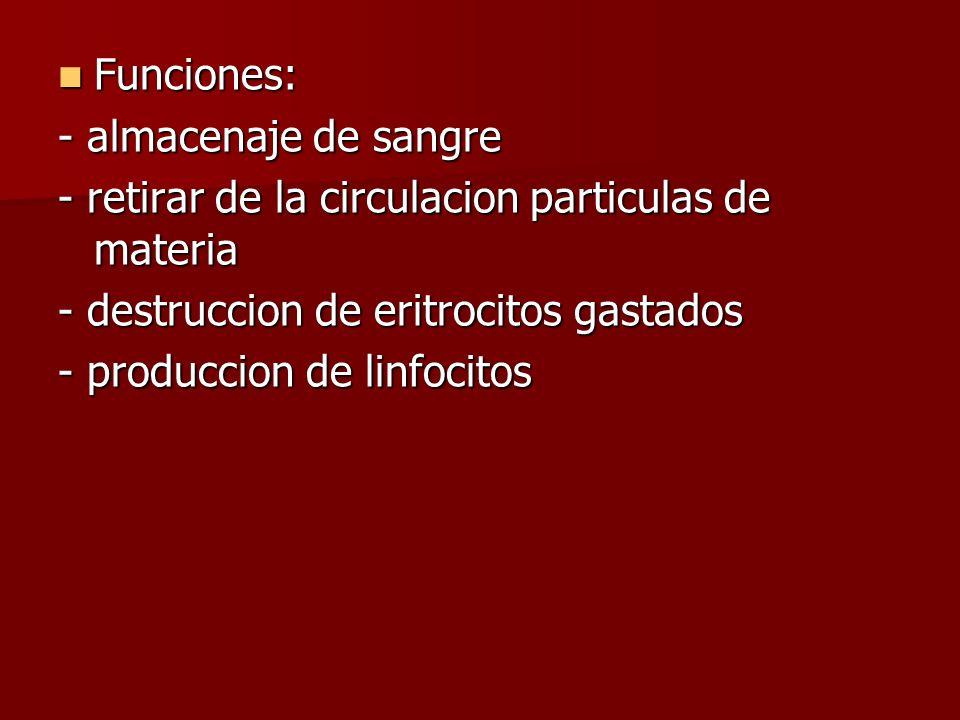 Funciones: Funciones: - almacenaje de sangre - retirar de la circulacion particulas de materia - destruccion de eritrocitos gastados - produccion de l