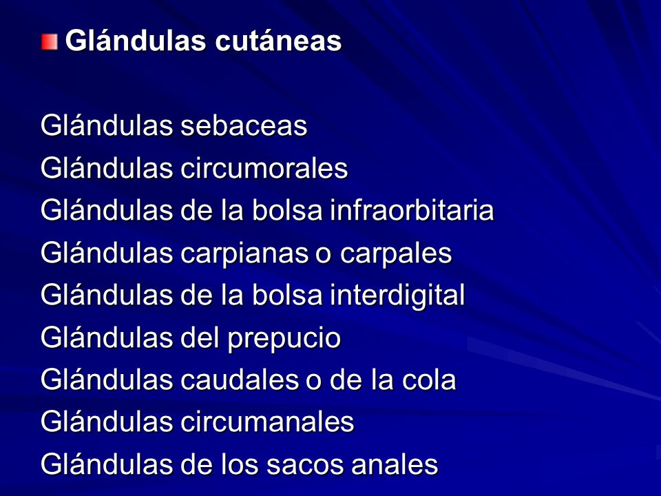 Glándulas cutáneas Glándulas sebaceas Glándulas circumorales Glándulas de la bolsa infraorbitaria Glándulas carpianas o carpales Glándulas de la bolsa