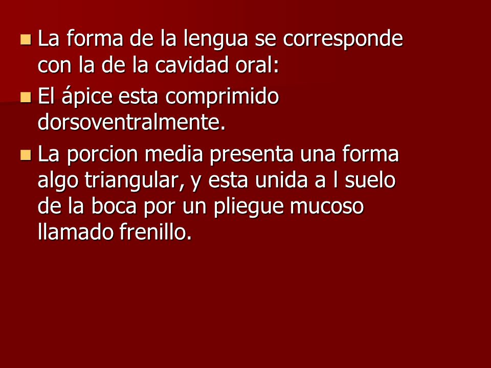 La forma de la lengua se corresponde con la de la cavidad oral: La forma de la lengua se corresponde con la de la cavidad oral: El ápice esta comprimi