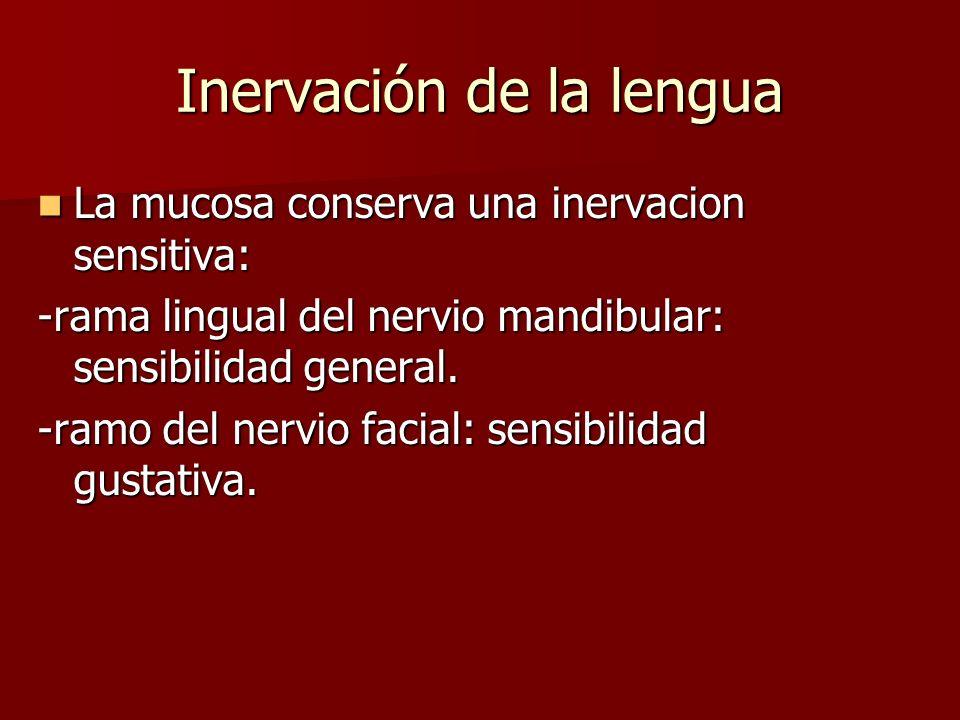 La mucosa conserva una inervacion sensitiva: La mucosa conserva una inervacion sensitiva: -rama lingual del nervio mandibular: sensibilidad general. -