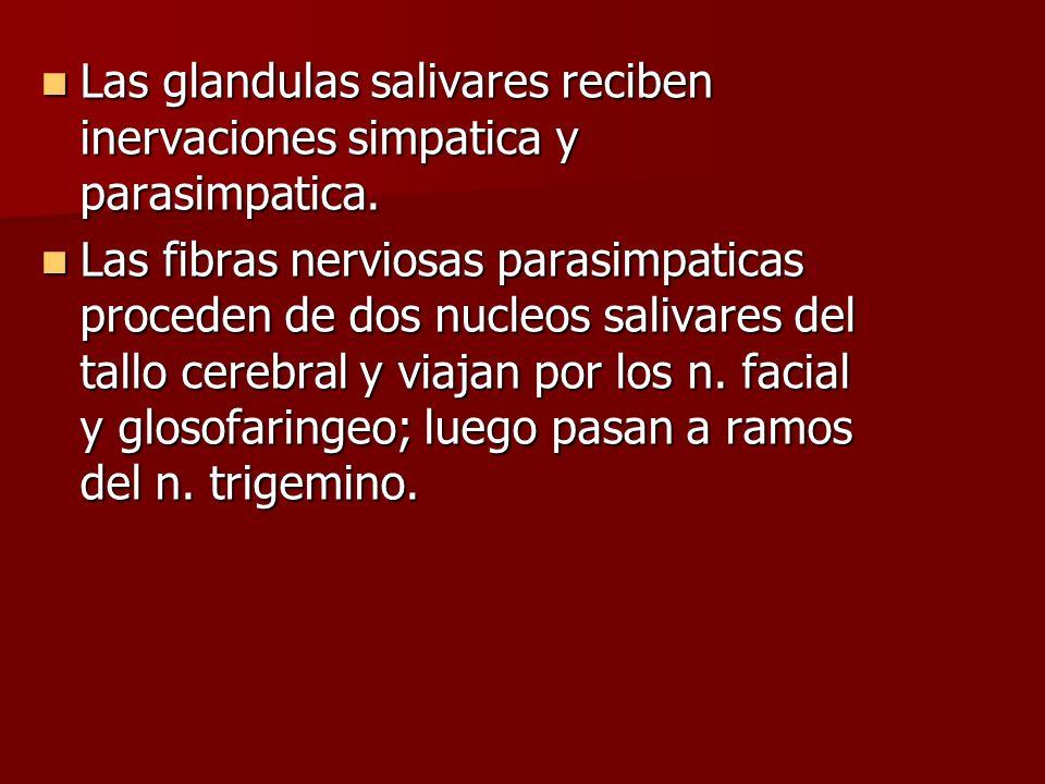 Las glandulas salivares reciben inervaciones simpatica y parasimpatica. Las glandulas salivares reciben inervaciones simpatica y parasimpatica. Las fi