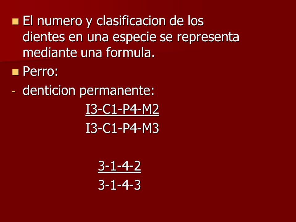 El numero y clasificacion de los dientes en una especie se representa mediante una formula. El numero y clasificacion de los dientes en una especie se