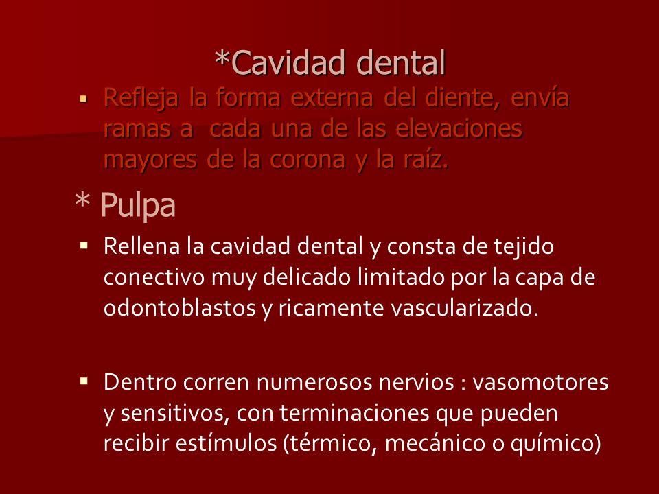 *Cavidad dental Refleja la forma externa del diente, envía ramas a cada una de las elevaciones mayores de la corona y la raíz. Refleja la forma extern