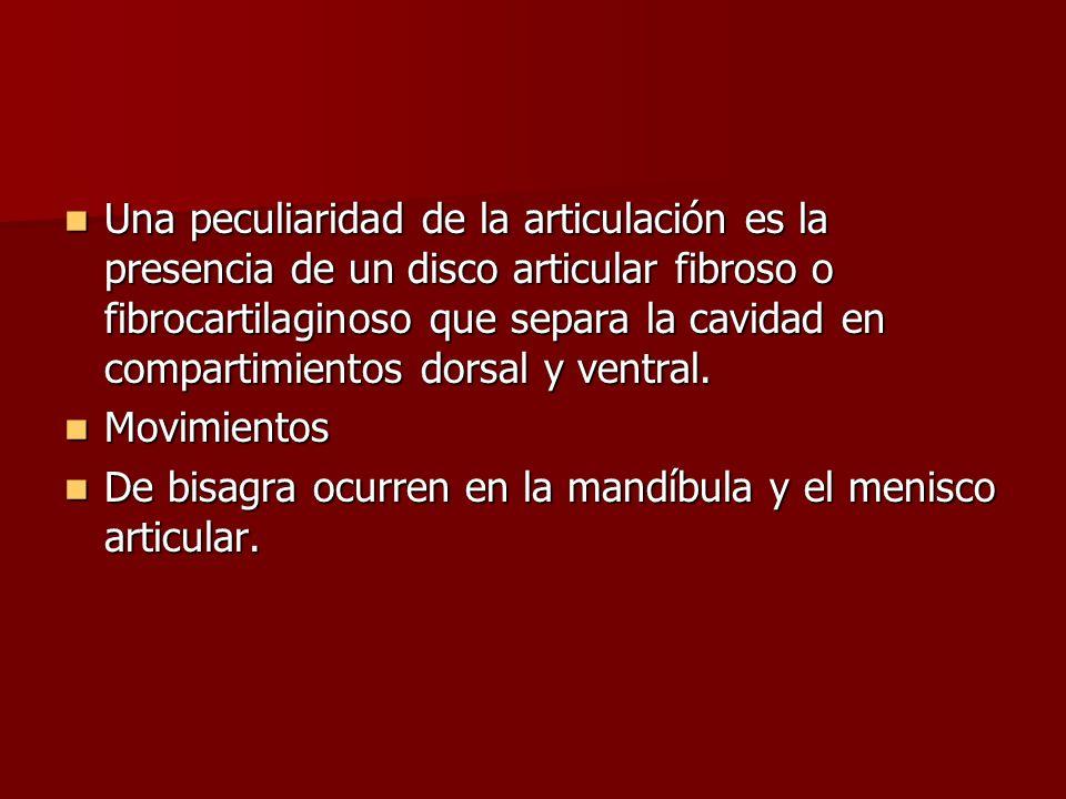 Una peculiaridad de la articulación es la presencia de un disco articular fibroso o fibrocartilaginoso que separa la cavidad en compartimientos dorsal
