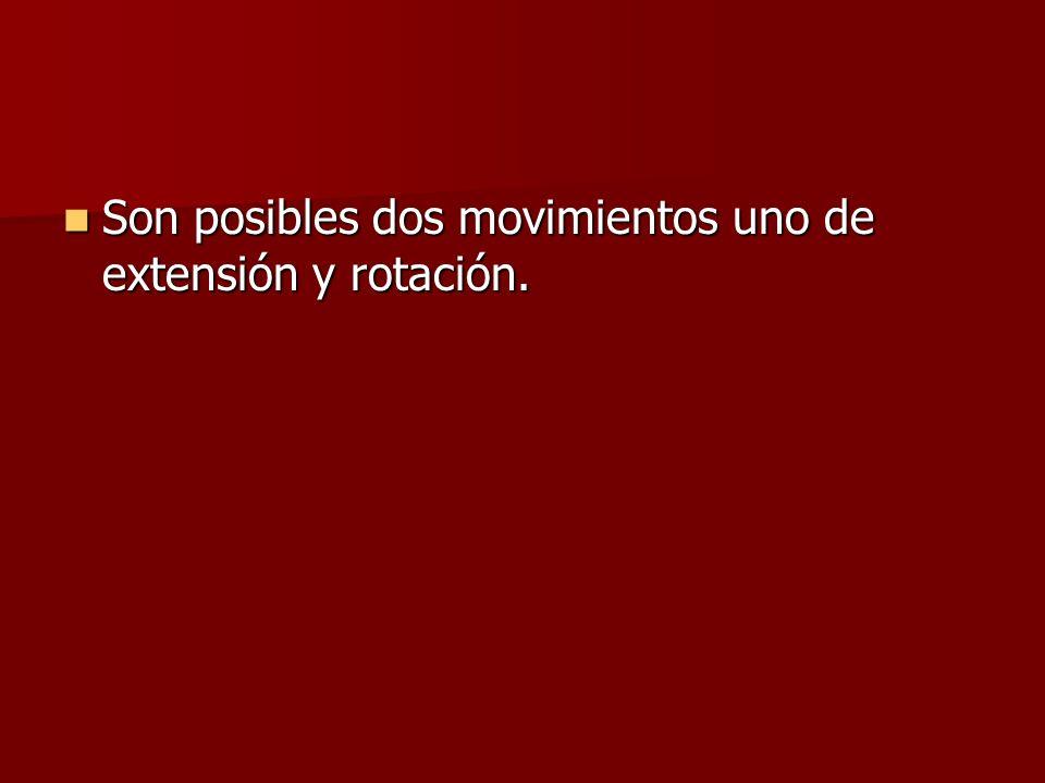 Son posibles dos movimientos uno de extensión y rotación. Son posibles dos movimientos uno de extensión y rotación.