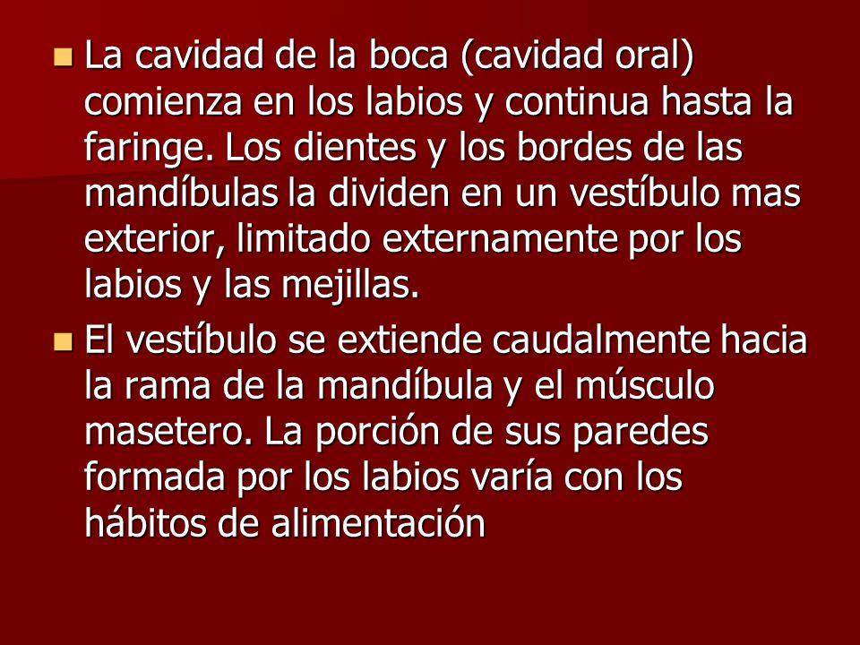 La mucosa conserva una inervacion sensitiva: La mucosa conserva una inervacion sensitiva: -rama lingual del nervio mandibular: sensibilidad general.