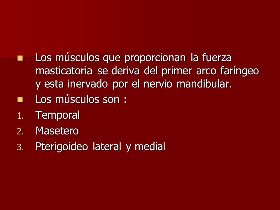 Los músculos que proporcionan la fuerza masticatoria se deriva del primer arco faríngeo y esta inervado por el nervio mandibular. Los músculos que pro