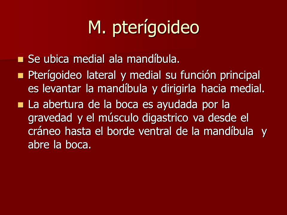 M. pterígoideo Se ubica medial ala mandíbula. Se ubica medial ala mandíbula. Pterígoideo lateral y medial su función principal es levantar la mandíbul