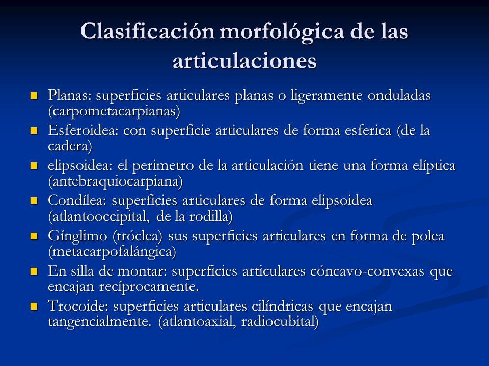 Clasificación morfológica de las articulaciones Planas: superficies articulares planas o ligeramente onduladas (carpometacarpianas) Planas: superficie