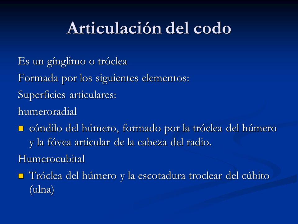 Articulación del codo Es un gínglimo o tróclea Formada por los siguientes elementos: Superficies articulares: humeroradial cóndilo del húmero, formado