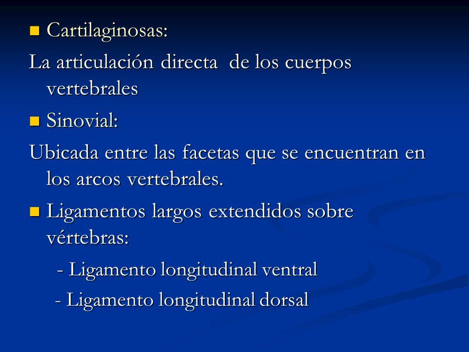 Cartilaginosas: Cartilaginosas: La articulación directa de los cuerpos vertebrales Sinovial: Sinovial: Ubicada entre las facetas que se encuentran en